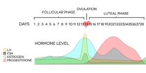 prednisone affecting period